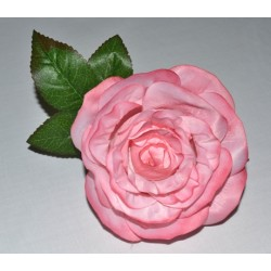12-Rosa-maravilla